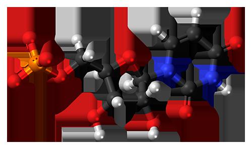 Uridine Monophosphate