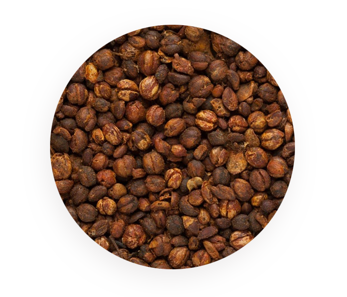 celastrus paniculatus seed extract